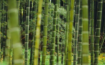 Protectors de bambú per a coixins i matalassos